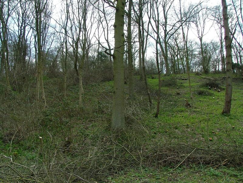 Thinned woodland